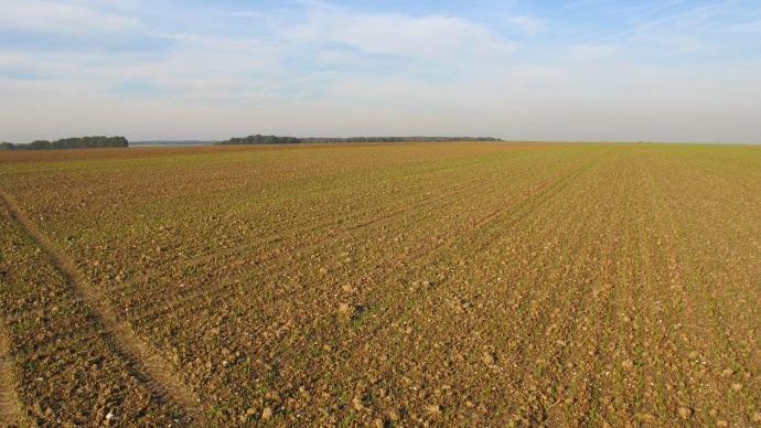 Plaine de blé