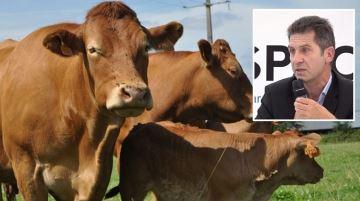 La Chine ouvre à nouveau son marché immense pour la viande bovine française