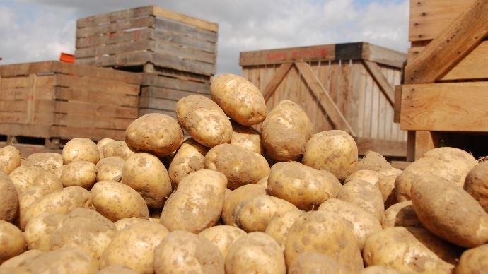 produits anti germinatifs pour pommes de terre de consommation. Black Bedroom Furniture Sets. Home Design Ideas