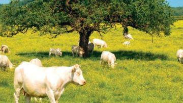France Conseil Elevage accompagne les éleveurs sur le bien-être animal
