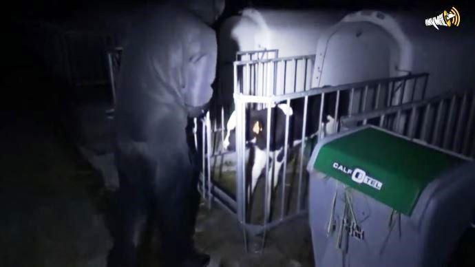 L'humoriste Rémi Gaillard poste une vidéo anti-élevage et scande «libérons les vaches» lorsqu'on voit sur les images un individu en train de sortir un veau de sa case en pleine nuit
