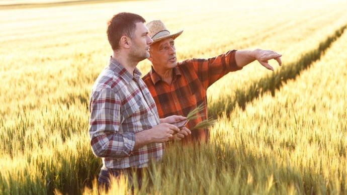 jeune et vieil agriculteurs dans un champ de ble