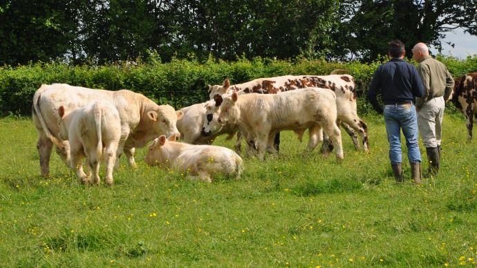 Constatant les mesures mises en place inadaptée pour lutter contre la FCO, les autorités sanitaires ont décider de lever les restrictions aux mouvements d'animaux sur l'ensemble du territoire. La vaccination devient facultative, à la charge des éleveurs.