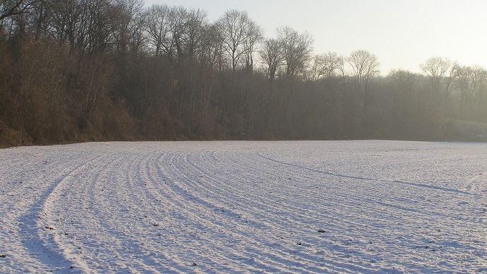 La vague de froid aux Etats-Unis cette semaine a touché des cultures peu couvertes par la neige, et donc plus sensibles aux variations thermiques.