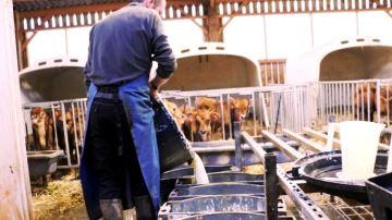 Le kéfir: un lait fermenté plus digestible pour des veaux en bonne santé