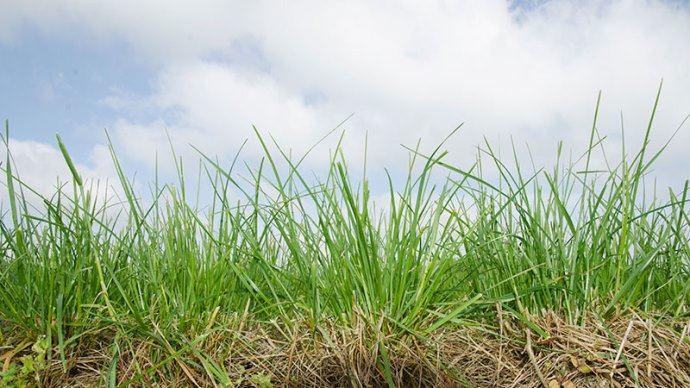 Déterminer la date du premier apport d'azote sur la prairie