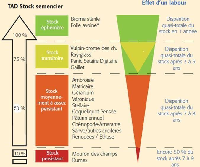 Schéma montrant l'effet d'un labour en fonction du TAD du stock semencier