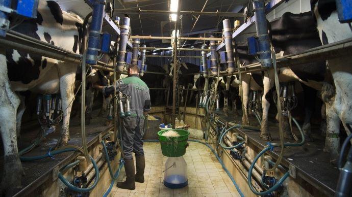 Du Danemark à la France, les prix à la production sont loin de couvrir les coûts des éleveurs.