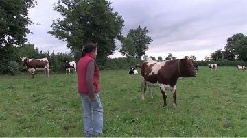 Quelques éleveurs bio évoquent leurmétier à c½ur ouvert dans un film dédié