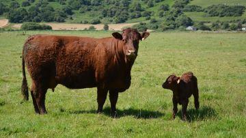 Neolait commercialise un nouveau bolus pour pallier les déficits liés à l'herbe