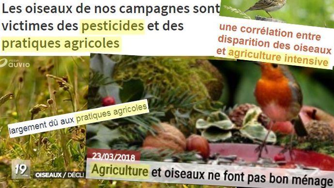 L'agriculture accusée par les médias d'être responsable de la disparition des oiseaux