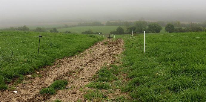 Avec un parcellaire vallonné et humide par endroits, François accorde de l'importance aux chemins d'accès pour préserver la santé des pattes de ses vaches