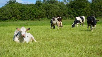 Sodiaal présente une initiative pour revaloriser son lait de consommation