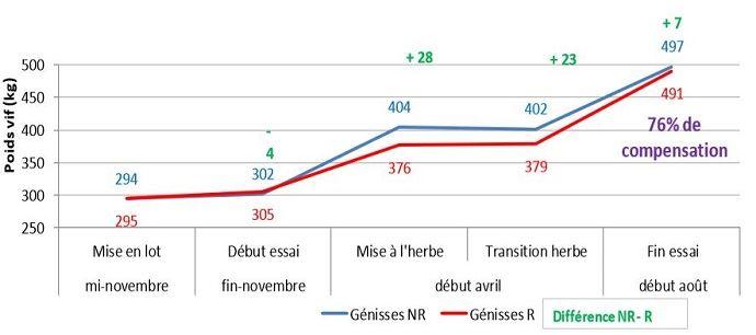 En moyenne, sur les 3 hivers, les génisses rationnées ont compensé 76M du poids non pris pendant l'hiver grâce à la valorisation de l'herbe de printemps.
