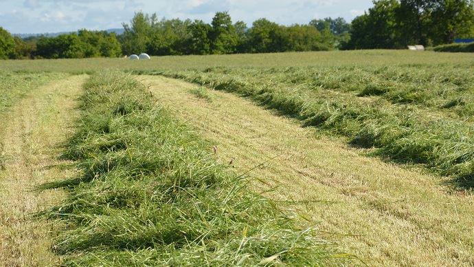 Coûts de la récolte de l'herbe: foin, ensilage et enrubannage