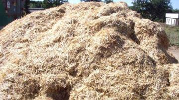 Passez au mash fibreux pour réduire l'astreinte et assurer la croissance du veau