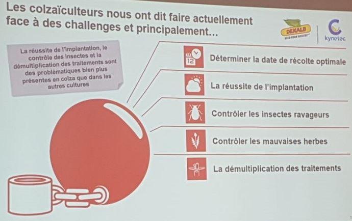 Challenges des colzaïculteurs français