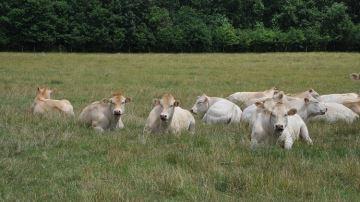 La finition des jeunes femelles à l'herbe: c'est possible!