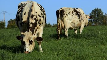 Dimanche 10 juin, participez à la fête du lait bio