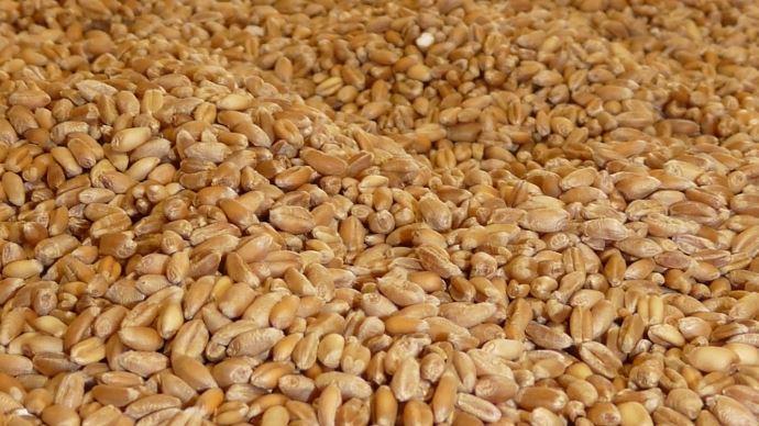 Le prix payé au producteurs de blé tendre n'a que peu évolué au cours de la campagne de commercialisation 2017-2018.