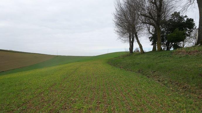 Les parcelles de l'EARL Astarac ont subi l'érosion au fil des années. Il manque jusqu'à 60 cm entre la partie cultivée et le bord de la parcelle.
