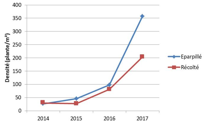 Evolution de la densité de ray-grass avant récolte depuis la mise en place de l'essai selon que les menues pailles sont exportées ou éparpillées (essai 2014-2017)