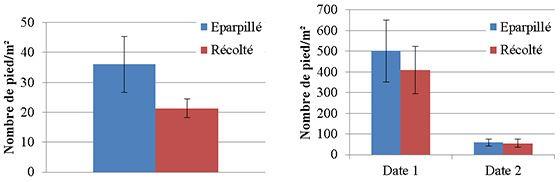 Repousses de céréales (en pieds/m2) levées à l'interculture après exportation ou non des menues pailles (blé en 2014 et orge en 2015)