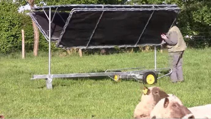 OviFresh pour l'ombre pendant le pâturage des ovins
