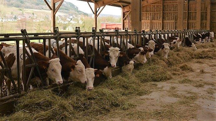 Le projet de recherche From'mir étudie les facteurs de fromageabilité du lait