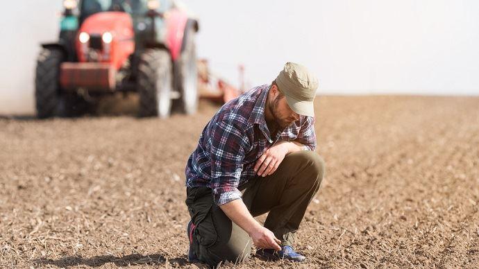 Des conditions trèssèches pour les semis de colza en France