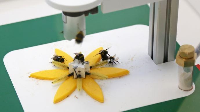 Observation des abeilles sur fleur connectée