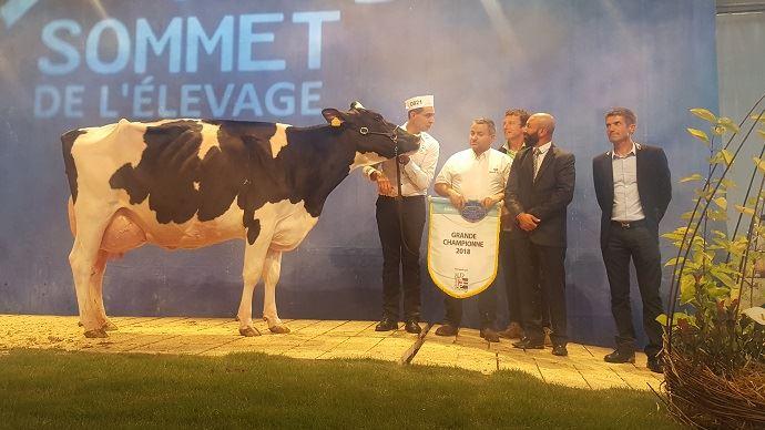 Salinoise Discrete (Terrason x Rubens) du Gaec Dupuis et N Damon est sacrée grande championne Prim'holstein du Sommet de l'élevage 2018