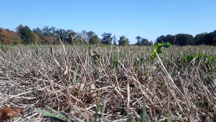 La sécheresse estivale a impacté de nombreux éleveurs et il semblerait que cette situation devrait se répéter de plus en plus fréquemment...