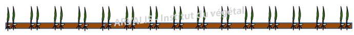 Exemple de confiuration pour le semis de la céréale d'hiver (Ecart. rangs: 15 cm / 2 rangs semés pour 2 rangs fermés)