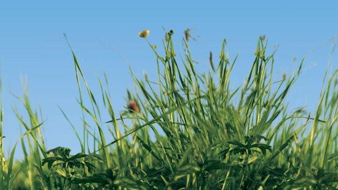 Le projet Inno4grass vise à faire progresser les systèmes herbagers européens