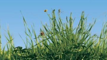 Plus de lien entre la recherche et le terrain grâce au projet Inno4grass