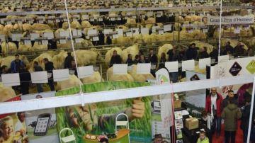 Le festival du b½uf charolais c'est ce week-end à Charolles!