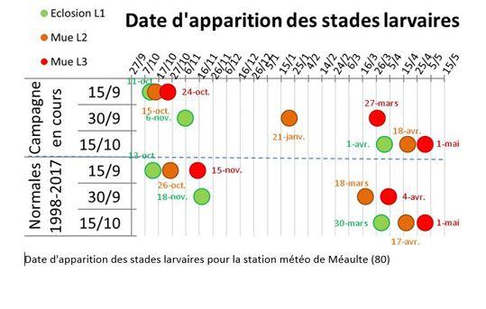 Date d'apparition des stades larvaires pour la station de Méaulte (80)