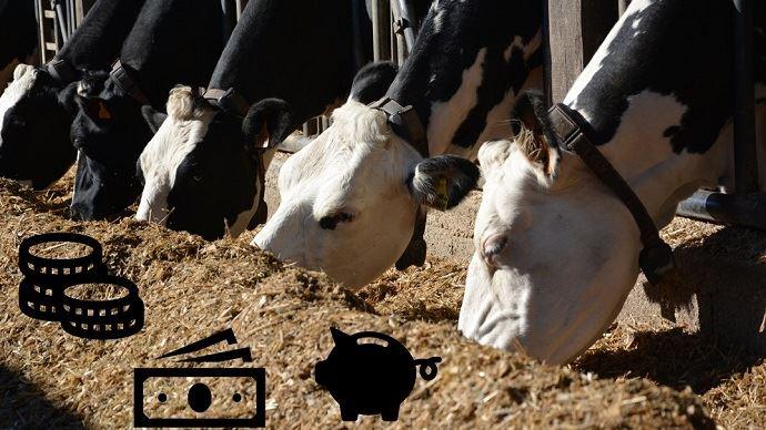 Produire plus pour gagner plus: cette formule est-elle si vraie? Les chambres d'agriculture de Bretagne se sont penchées sur la question.