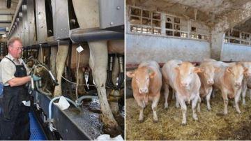 Croissance pour le marché européen laitier, décroissance pour celui de la viande