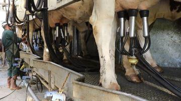 Viser la productivité par vache ou augmenter la taille du cheptel?