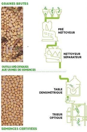 Parcours des graines brutes aux semences certifiées