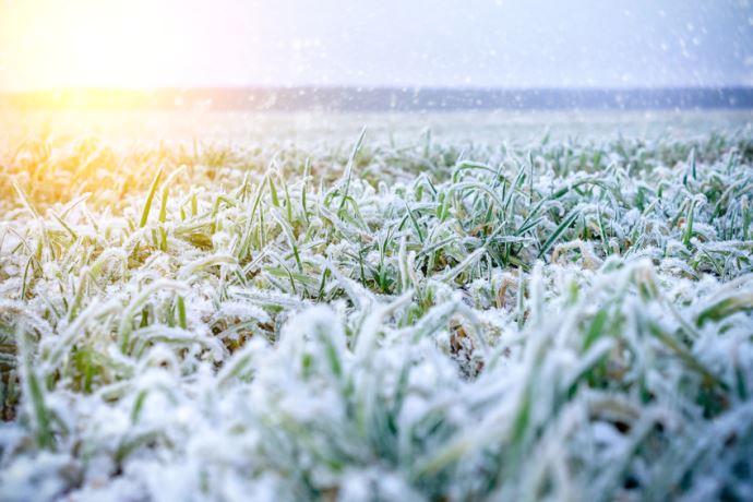 Un manteau neigeux protège des températures négatives