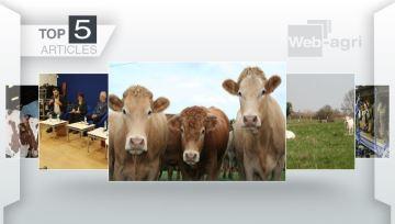 Résultats élections chambres et marché de la viande bovine dans le top 5