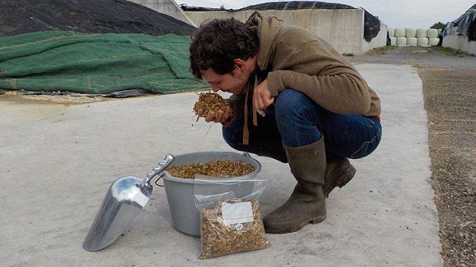 Vérifier l'état de conservation du maïs ensilage c'est: mesurer la température, sentir le fourrage, vérifier la présence de moisissures et éventuellement faire une analyse en labo.