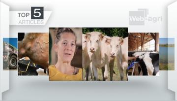 Les vaches du futur et l'abattoir mobile font la Une