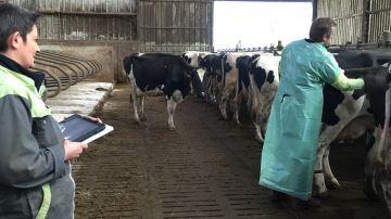 Bien calculer son besoin pour ne pas pousser trop de vaches à la réforme