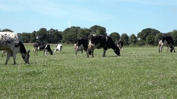 «Pourquoi toutes les vaches ne sont pas à l'herbe? »