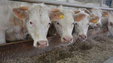 Cinq abattoirs français agréés par la Chine, 6 tonnes exportées en un an