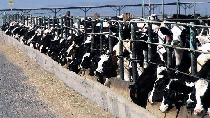 Les Etats-Unis pourraient disposer d'un contingent de 35000 tonnes de viande bovine sans hormone.